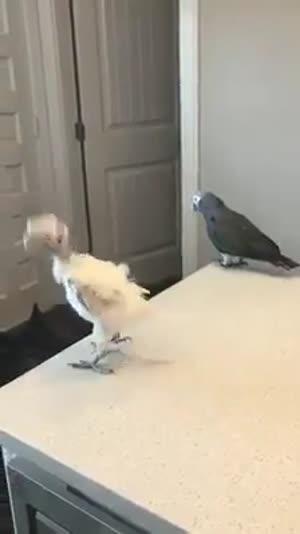 Des oiseaux qui ont le sens du rythme!